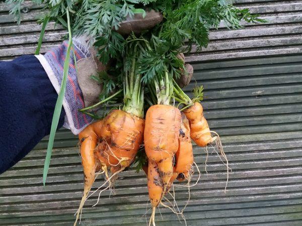 Carrot, Red Lentil & Chilli Soup